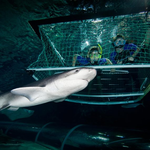 Kelly Tarlton's SEA LIFE Aquarium - Shark Cage Experience