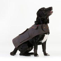 Swanndri The Hunter Dog Cover