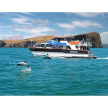 Nature Cruise at Akaroa Harbour, Canterbury