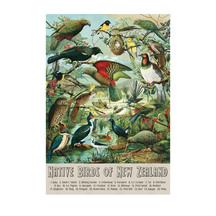 Native Birds of New Zealand A2 Print