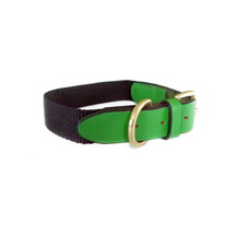 Animal Outfitters Madison Dog Collar - Green