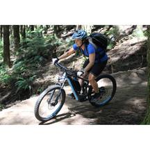 Redwoods Forest E-Bike Half Day Tour